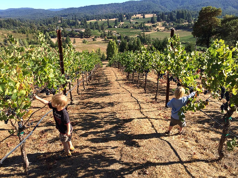 Kids in vineyard